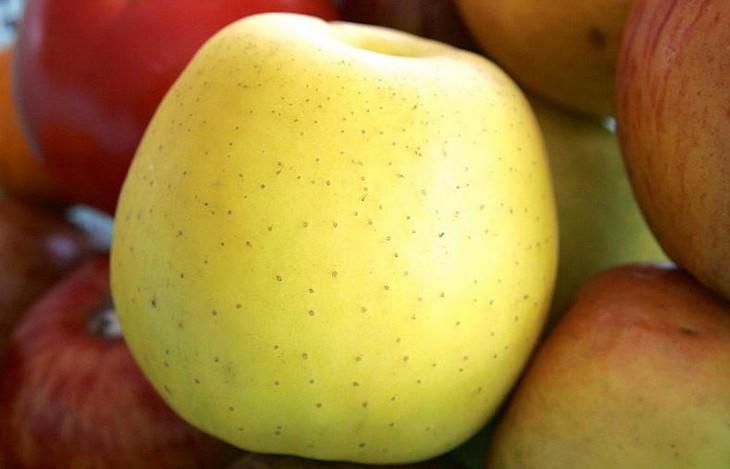 מדריך זנים של תפוחים: גולדן דלישס