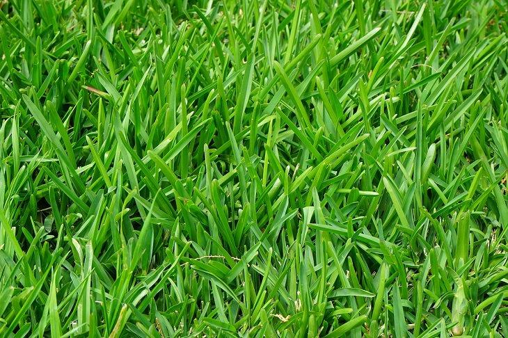 טיפים לכביסה ושמירה על בגדים: דשא