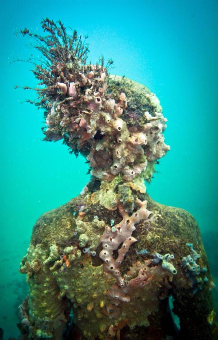 פסלים תת מימיים של ג'ייסון טיילור: פסל שגדלו עליו אלמוגים