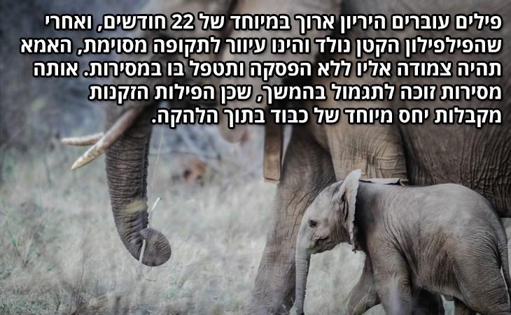 שיעורים בהורות וזוגיות מבעלי חיים: פילים עוברים היריון ארוך במיוחד של 22 חודשים, ואחרי שהפילפילון הקטן נולד והינו עיוור לתקופה מסוימת, האמא תהיה צמודה אליו ללא הפסקה ותטפל בו במסירות. אותה מסירות זוכה לתגמול בהמשך, שכן הפילות הזקנות מקבלות יחס מיוחד של כבוד בתוך הלהקה.