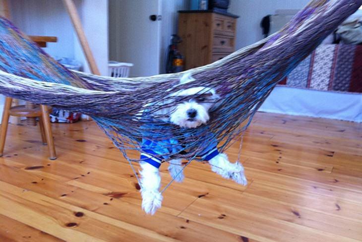 חיות מצחיקות: כלב תקוע בערסל