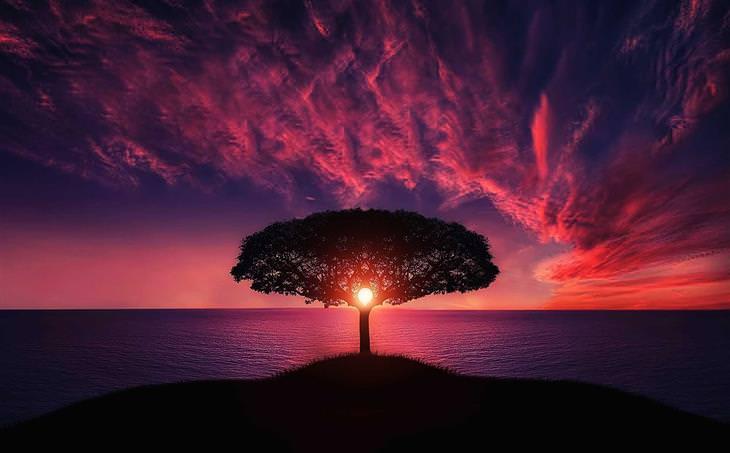 טיפים לרוגע על פי האסכולה הסטואית: עץ ומאחוריו שקיעה בצבעים מרהיבים