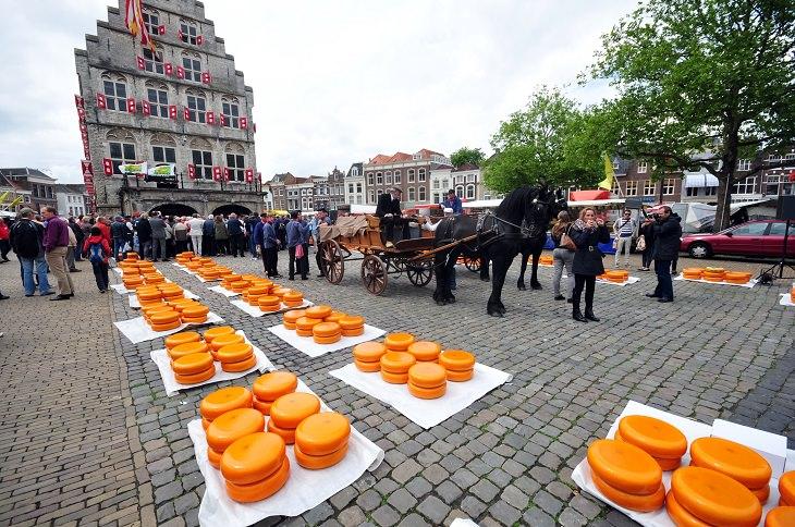 מסלול טיול בדרום הולנד: שוק הגבינות בחאודה