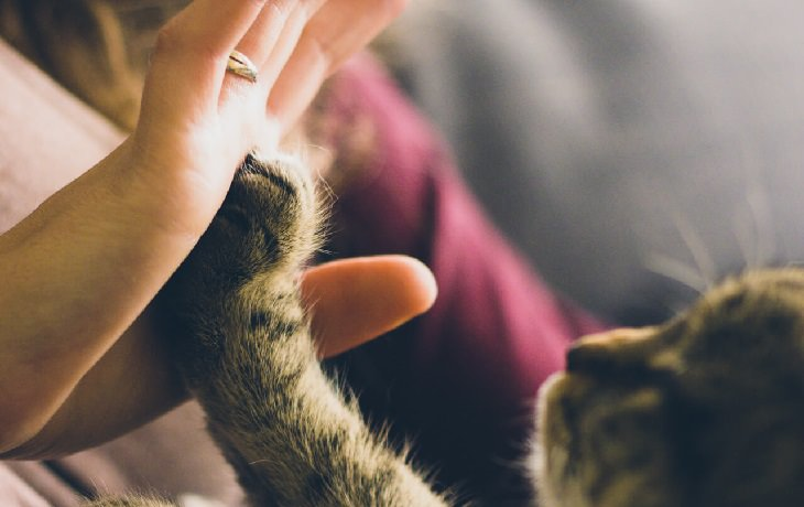 מחקר על חתולים: חתול מניח את אחת מכפותיו על יד אנושית
