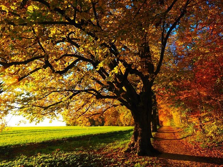 מסלולי טיולים לעונת הסתיו: שדרת עצים בשלכת