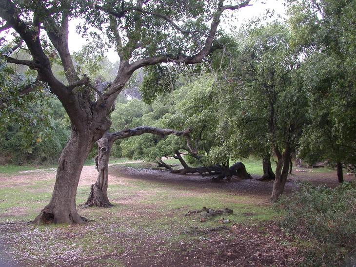 מסלולי טיולים לעונת הסתיו: חורשת הארבעים בהר כרמל