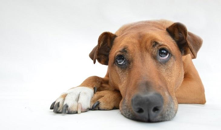 כלים ליישום חשיבה חיובית: כלב עצוב