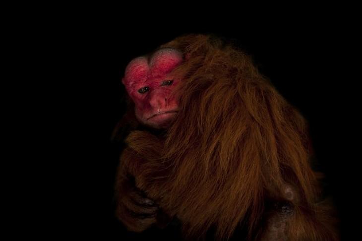 חיות מוזרות:  אואקרי