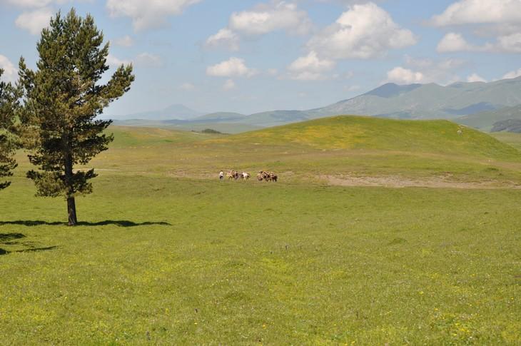 פארקים לאומיים בגאורגיה: הפארק הלאומי אלגטי (Algeti National Park)