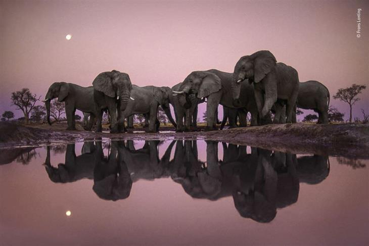 תמונות מדהימות של טבע פראי: עדר פילים ליד מאגר מים.