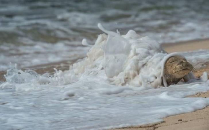 תמונות ברגע הנכון: כלב ים נחשף מבין אדוות גלים