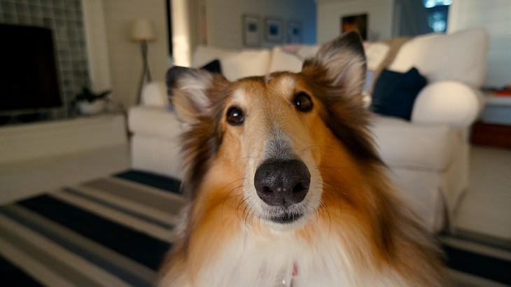 שאלות לחיזוק היחסים במשפחה: כלב מסתכל למצלמה במבט תוהה