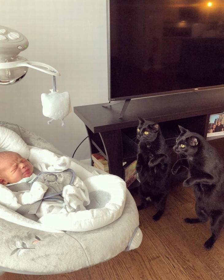 תמונות משפחתיות של חיות: חתולים עומדים על הרגליים ומסתכלים על תינוק