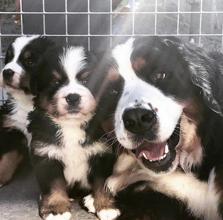 תמונות משפחתיות של חיות: כלבה מביטה למצלמה והגורים שלה