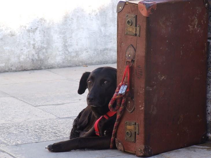 סימנים שהכלב שלכם חכם: כלב יושב ליד מזוודה
