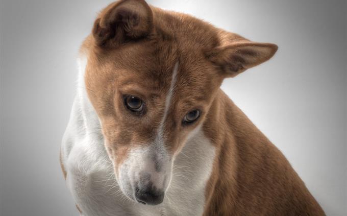 מבחן שפות זרות: כלב עצוב