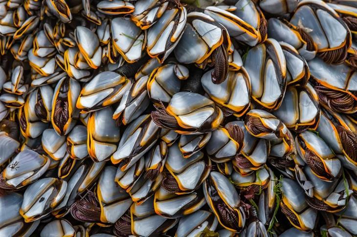 תחרות צילום הטבע הבריטית: זיפרגליים בצפיפות