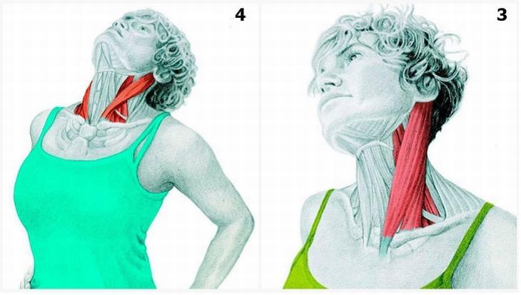 תרגילי מתיחות עם הסברים לשרירים הפועלים: כיפוף צד רוחבי של הצוואר והארכת הצוואר