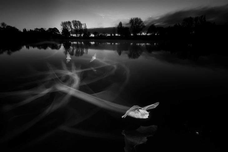 תחרות צילום הטבע הבריטית: עטלפים בתעופה מעל אגם בצילום נגטיב