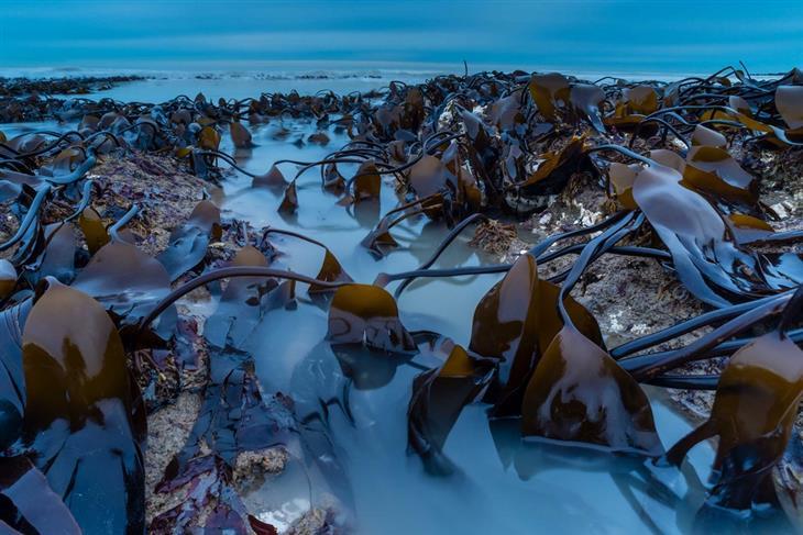 תחרות צילום הטבע הבריטית: אצות מעל פני המים