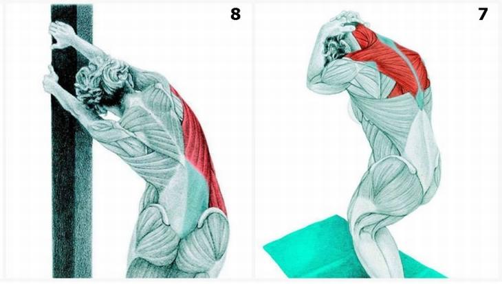תרגילי מתיחות עם הסברים לשרירים הפועלים: כיפוף הגב העליון ומתיחה צדית