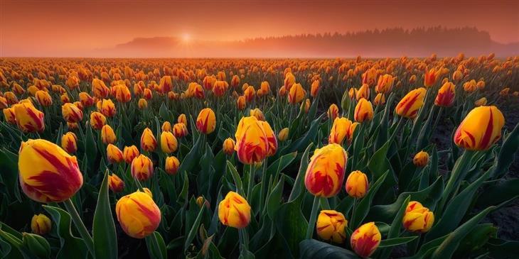 """צילומים פנורמיים מהתחרות הצילום הבינלאומית: """"צבעוניים אינטמיים"""" של אלברט דרוס – פלבולנד, הולנד"""