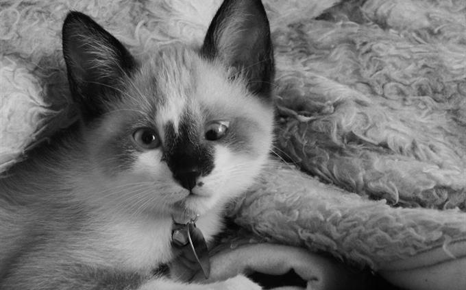 חידון סלנג: חתול