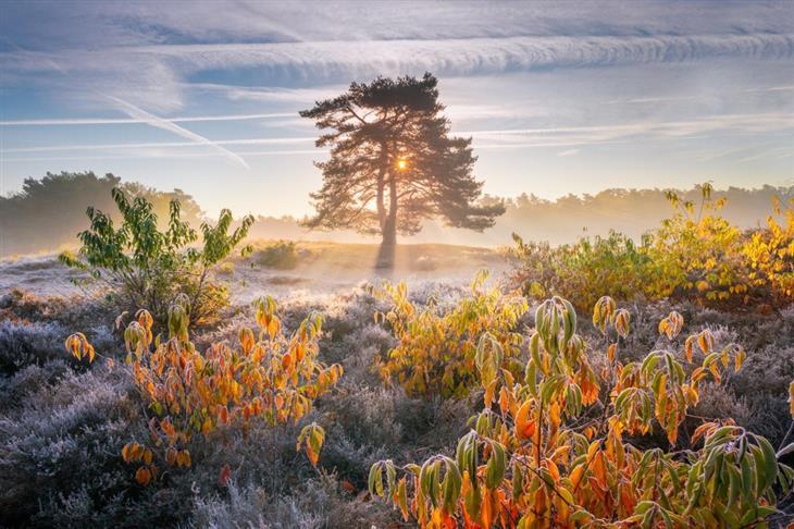 תמונות טבע מדהימות שנראות כמו ציור: אדמה מכוסה בכפור ומעליה מבצבצים צמחים בצבעי הסתיו