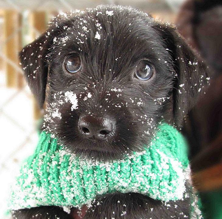 חיות חמודות בחורף: גור כלבים עם צעיף ומבט ממיס