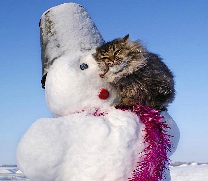 חיות חמודות בחורף: חתול יושב על הכתפיים של איש שלג