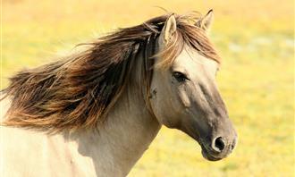 בחן את עצמך: סוס