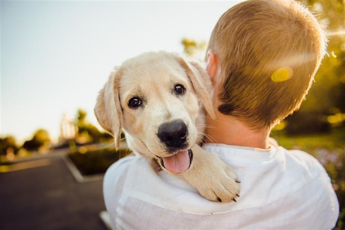 בחן את עצמך: איש מחבק כלב