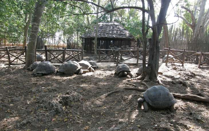 9 אטרקציות בזנזיבר: צבי ענק על אי האסירים בזנזיבר