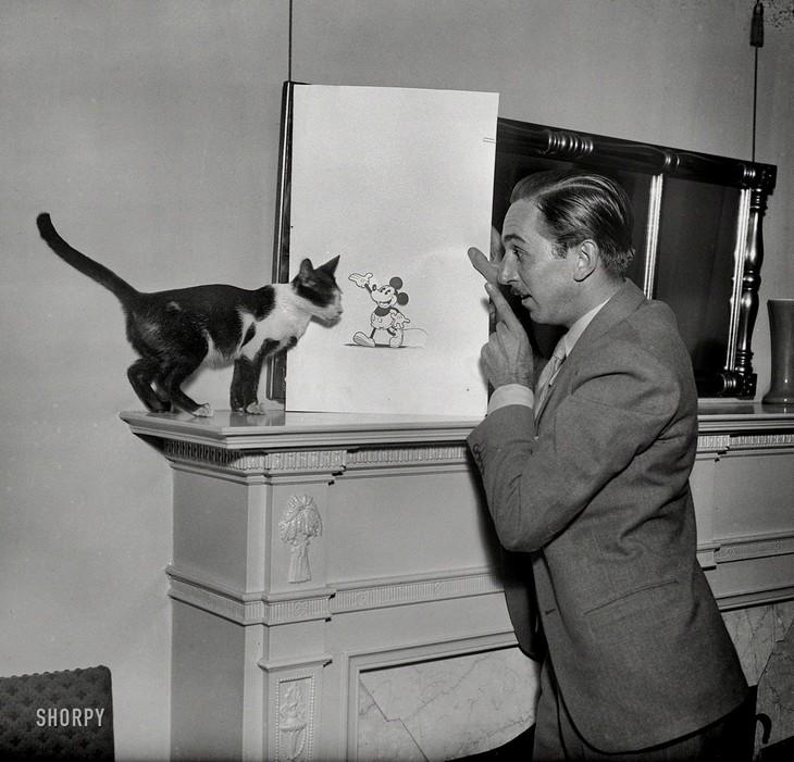 תמונות היסטוריות: וולט דיסני וחתול מסתכלים על ציור של מיקי מאוס.