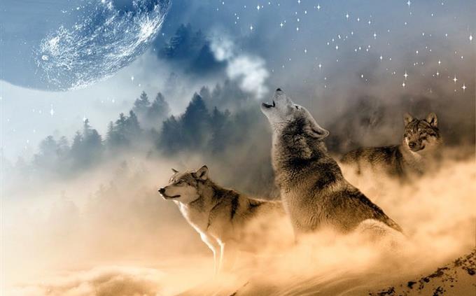טריוויית מוזיקה: שלושה זאבים מייללים וברקע ירח
