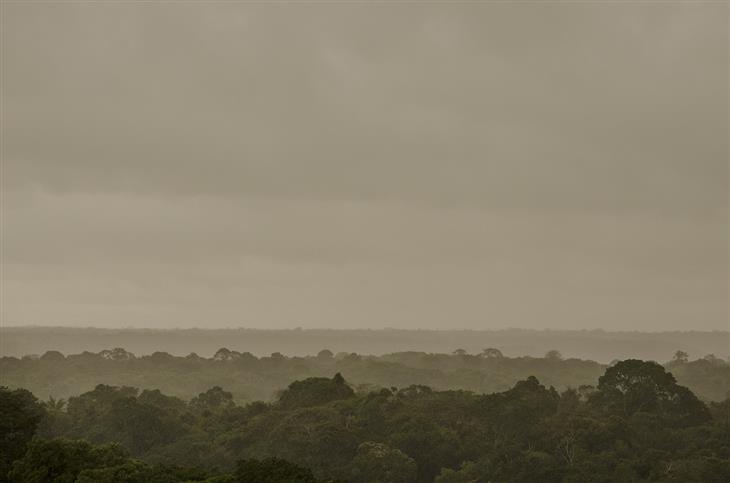 פריצות הדרך המדעיות של 2018: יערות האמזונס במבט עילי