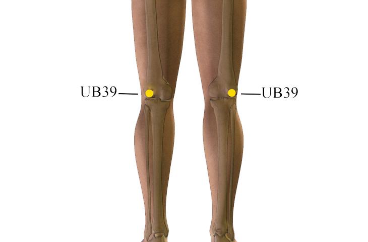 נקודות לחיצה לטיפול בבעיות בשתן ובכליות: UB39
