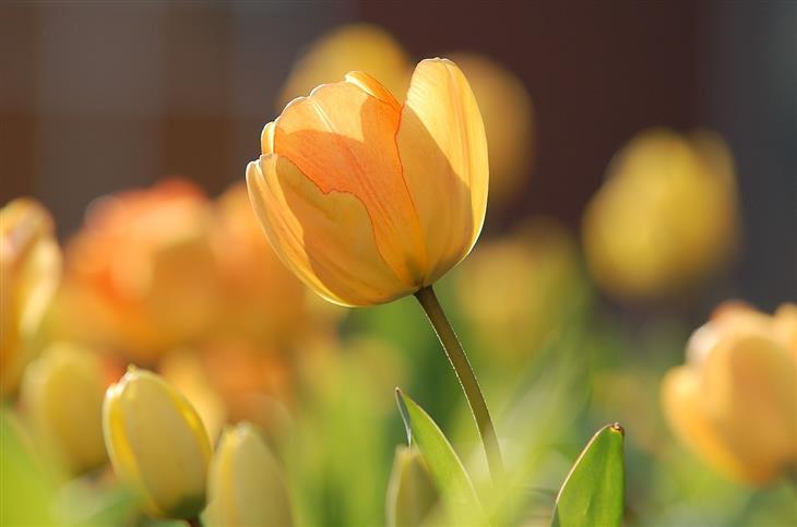 מה האופי שלכם על פי הפרחים שתבחרו: צבעוני