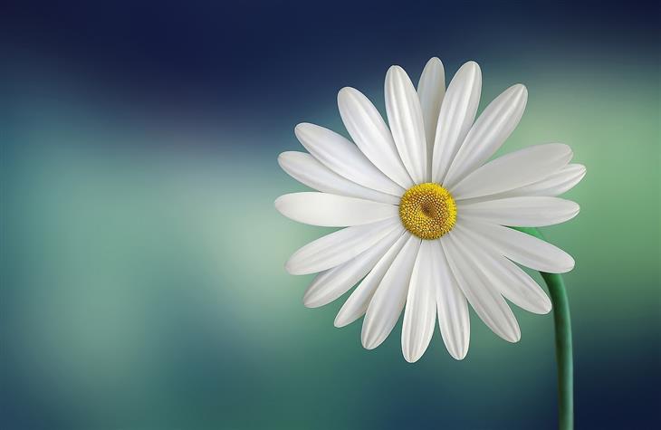 מה האופי שלכם על פי הפרחים שתבחרו: חיננית