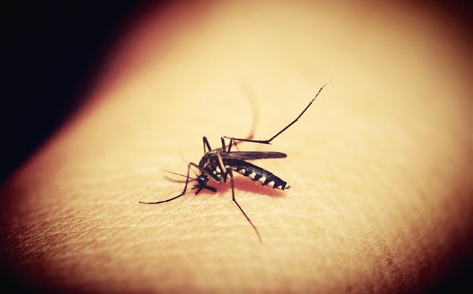 בחן את עצמך: יתוש