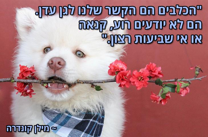 """ציטוטים על חיות מחמד והאדם: """"הכלבים הם הקשר שלנו לגן עדן. הם לא יודעים רוע, קנאה או אי שביעות רצון."""" ~ מילן קונדרה"""