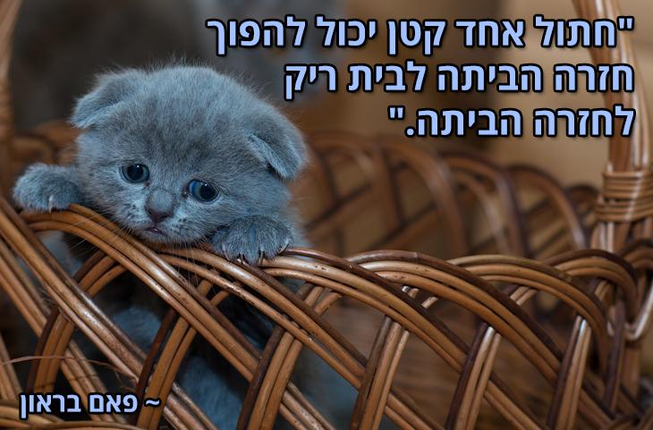 """ציטוטים על חיות מחמד והאדם: """"חתול אחד קטן יכול להפוך חזרה הביתה לבית ריק לחזרה הביתה."""" ~ פאם בראון"""