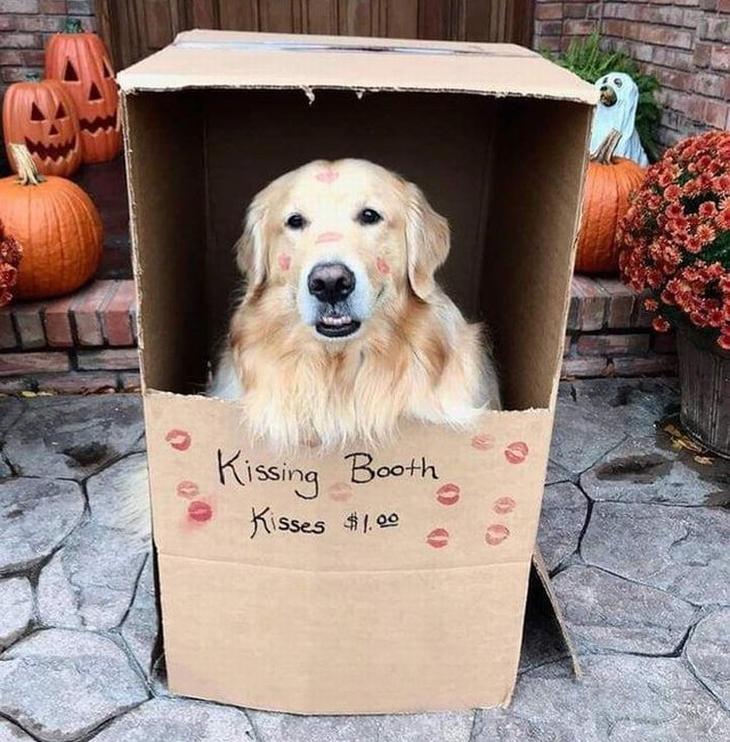 """חיות חמודות שימיסו לכם את הלב: כלב יושב בתוך אריזת קרטון מלאה בנשיקות, שרשום עליה """"דוכן נשיקות"""""""