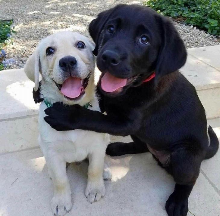 חיות חמודות שימיסו לכם את הלב: כלב מחבק כלב אחר ושניהם מסתכלים עם חיוך למצלמה