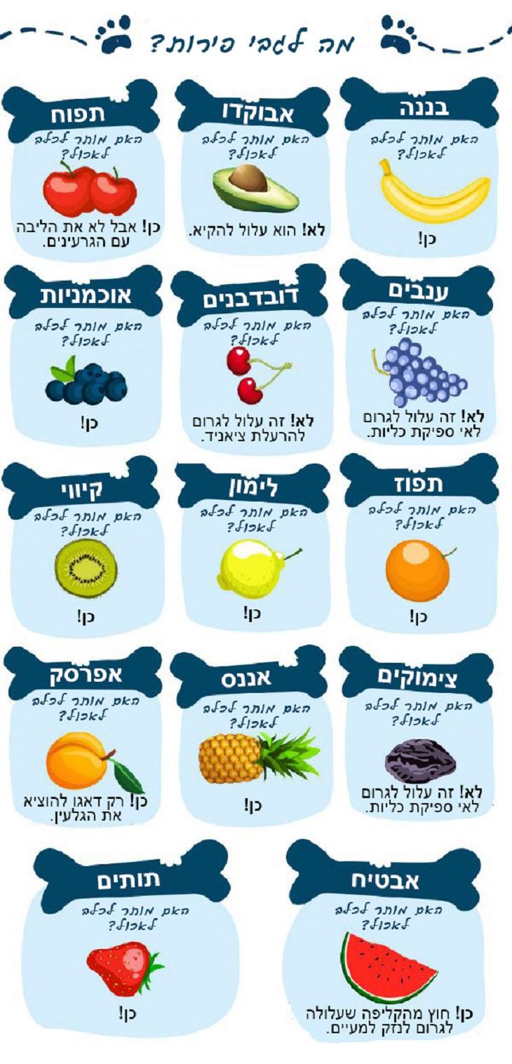 האם הכלב שלי יכול לאכול את זה: פירות - אסור ומותר