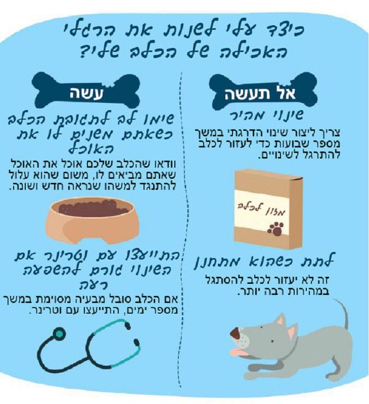 האם הכלב שלי יכול לאכול את זה: כיצד לשנות את הרגלי האכילה של הכלב