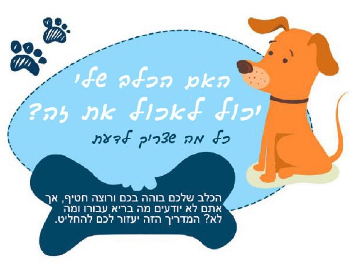 האם הכלב שלי יכול לאכול את זה: ציור של כלב וטקסט פתיחה