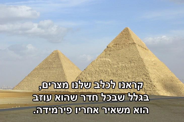 """ציטוטים של רודני דיינג'רפילד: """"קראנו לכלב שלנו מצרים, בגלל שבכל חדר שהוא עוזב הוא משאיר אחריו פירמידה."""""""