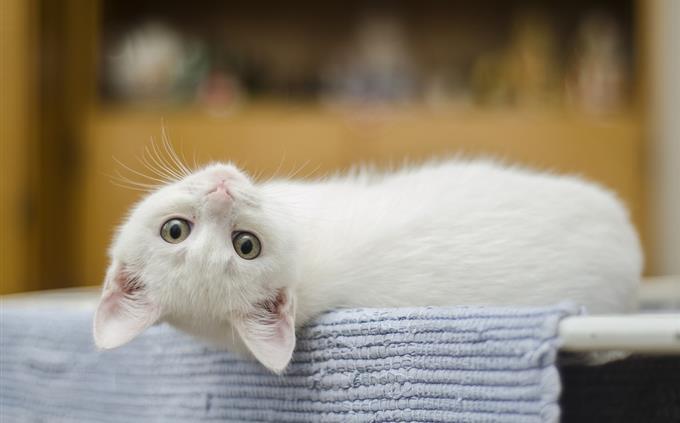 מבחן זיכרון: חתול חמוד