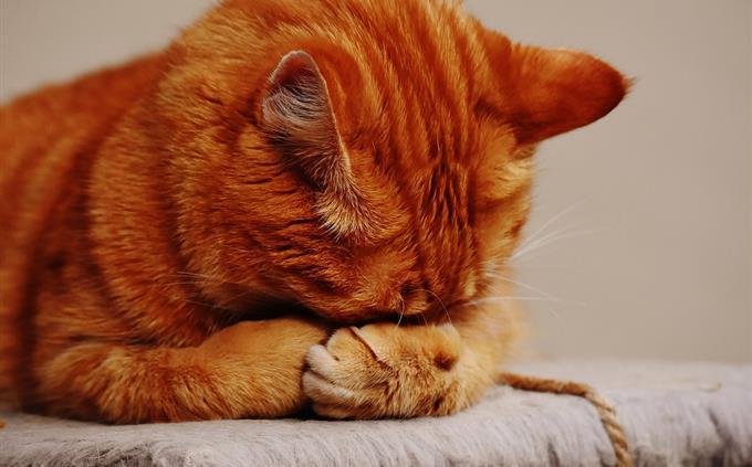 מבחן זיכרון: חתול מכסה את הפנים שלו